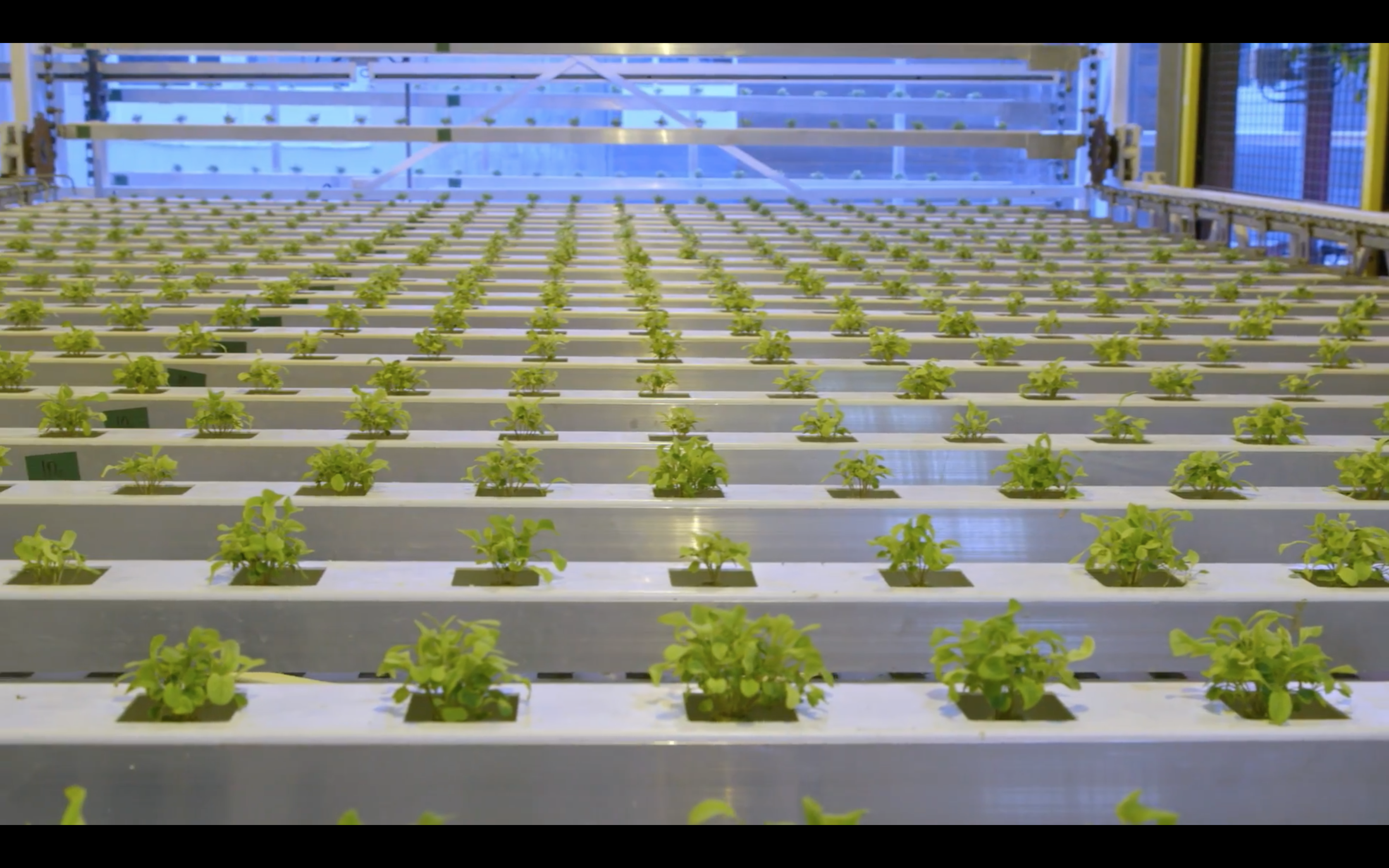 Hearts of Glass: A Vertical Farm Takes Root in Wyoming